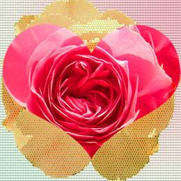 rose_heart